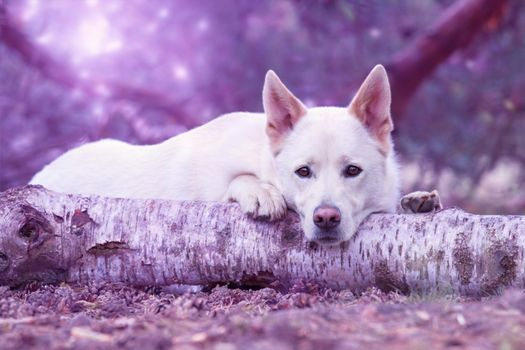 Photo free dog muzzle, log, lying