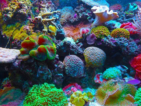Фото бесплатно море, биология, кораллы