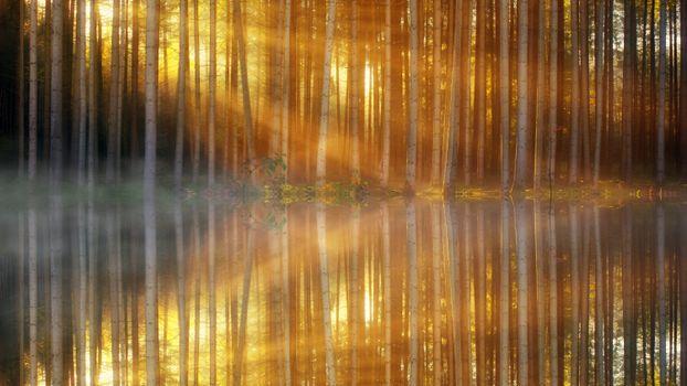 Photo free sunbeam, lake, trees