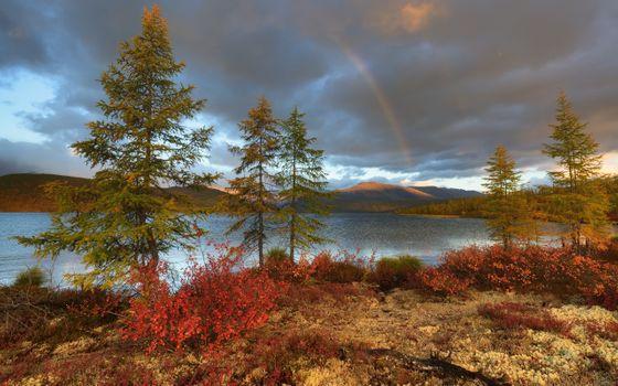 Фото бесплатно радуга, деревья, облака
