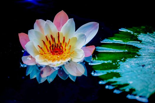 Picture about flowers, water lilies