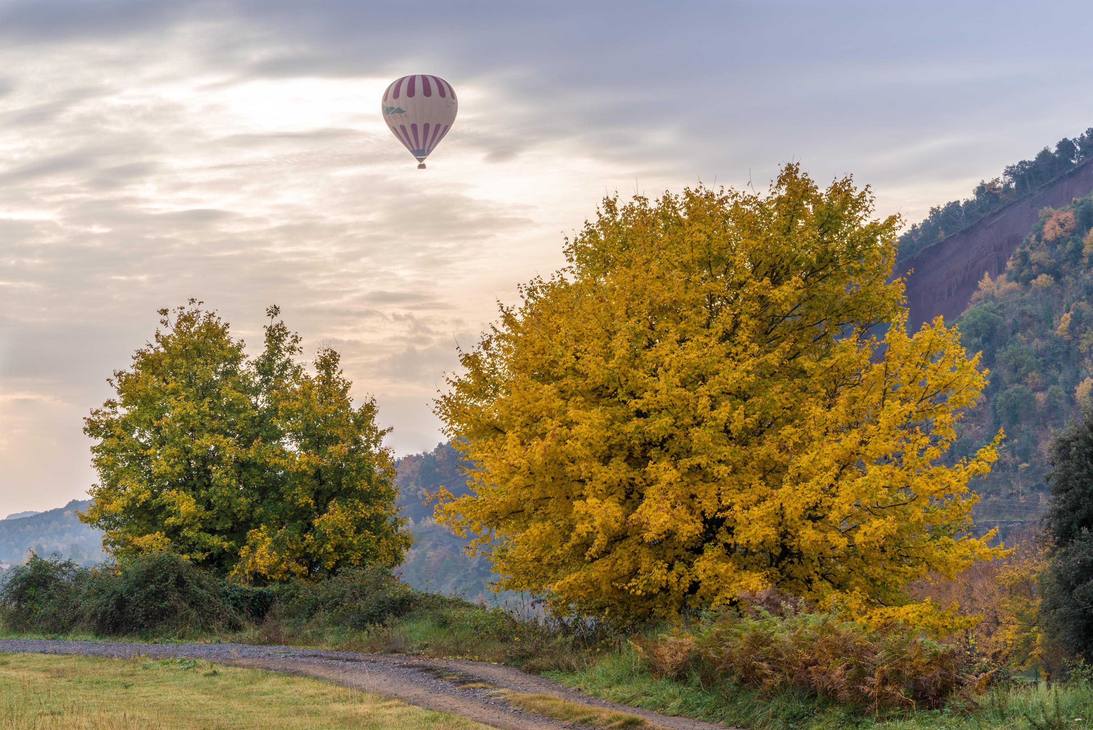 Обои осень, закат, поле, деревья