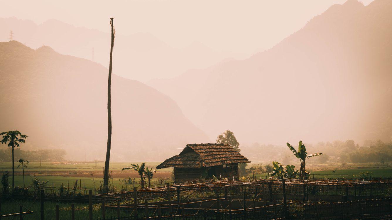 Обои джунгли, пальмы, Вьетнам, солома, хижина, бамбук, рисовый рис, горы, дом на дереве, природа, Азия на телефон | картинки пейзажи - скачать