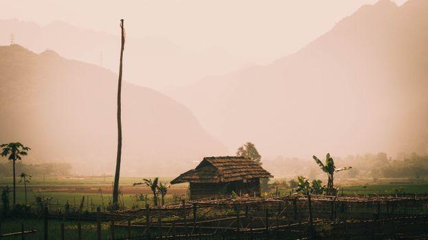 Бесплатные фото джунгли,пальмы,Вьетнам,солома,хижина,бамбук,рисовый рис,горы,дом на дереве,природа,Азия