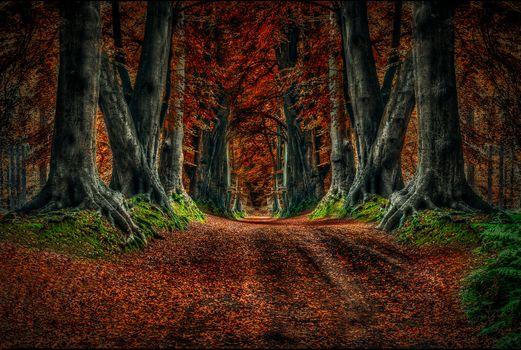 Photo free autumn leaves, autumn - on the desktop