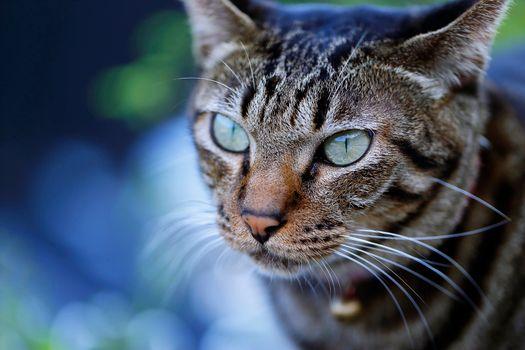 Фото бесплатно кот, кошка, морда