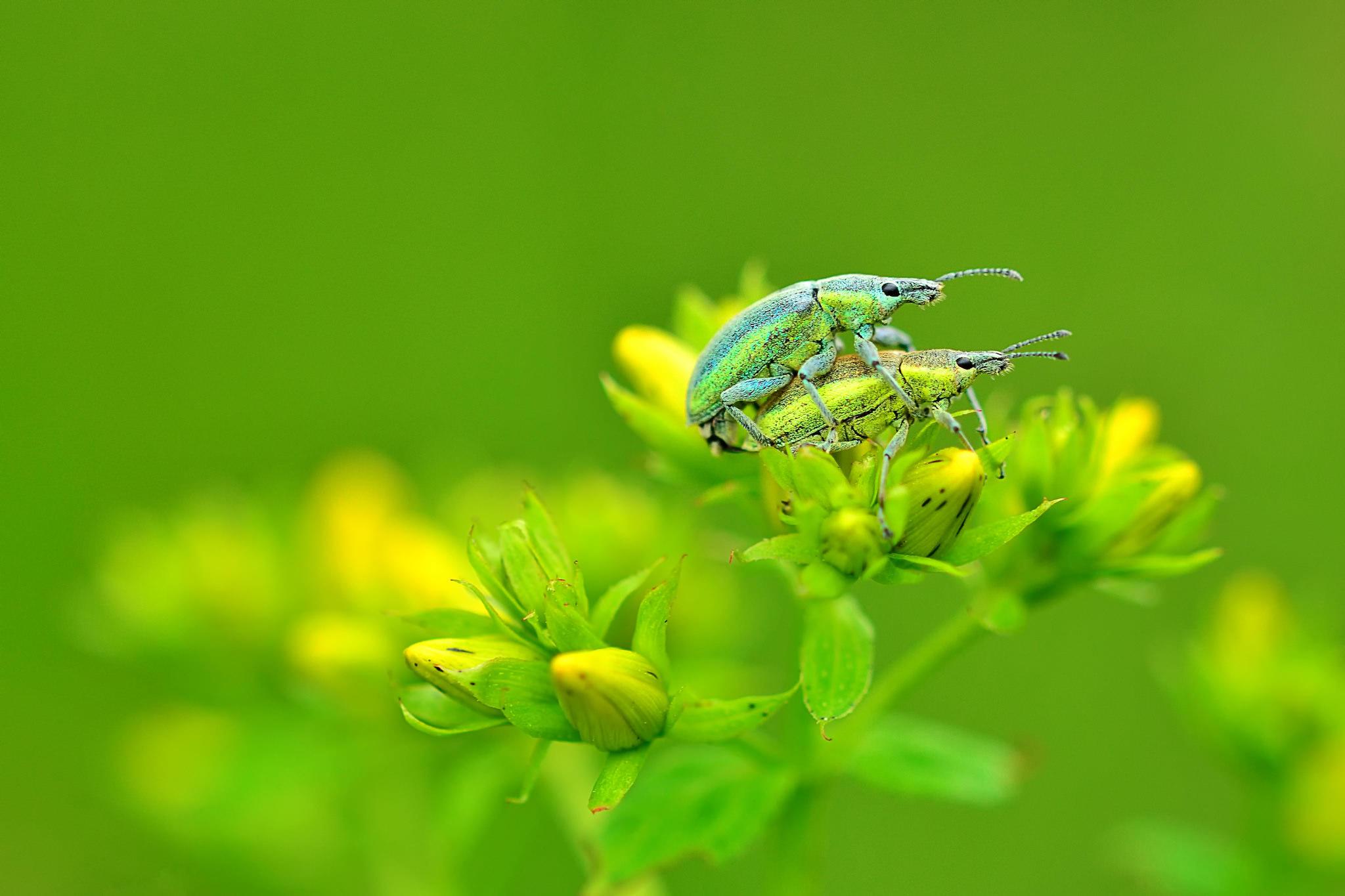 Обои цветы, жуки, макро