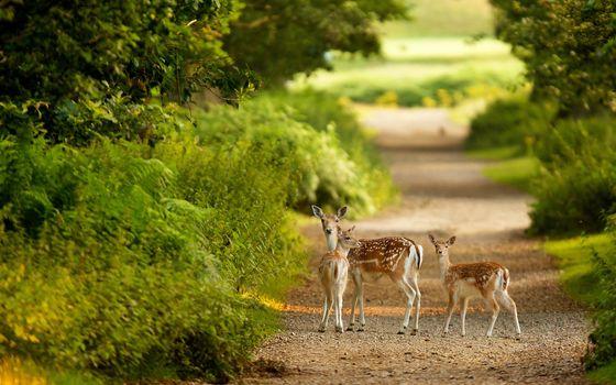 Photo free doe, path, fawn