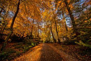 Бесплатные фото осень,лес,дорога,деревья,природа,пейзаж