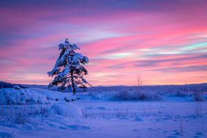 Бесплатные фото закат,зима,снег,дерево,пейзаж
