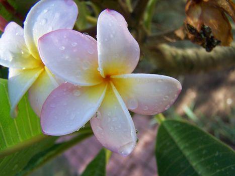 Фото бесплатно лепесток, макросъёмка, ботаника