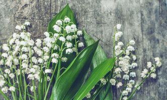 Бесплатные фото ландыши,цветы,цветок,букет,цветочная композиция,флора