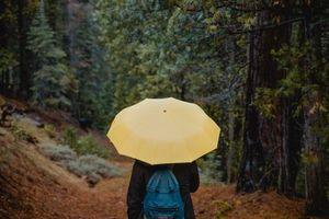 Фото бесплатно зонт, лицо, прогулка