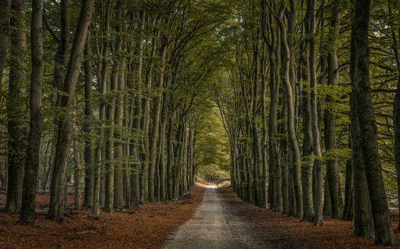 Фото бесплатно лес, аллея, пейзаж