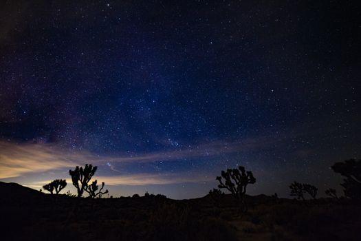 Бесплатные фото звездное небо,шипы,кусты,ночь,starry sky,spines,bushes,night