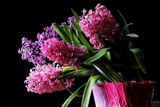 Бесплатные фото hyacinth,гиацинт,цветы,чёрный фон,букет,флора