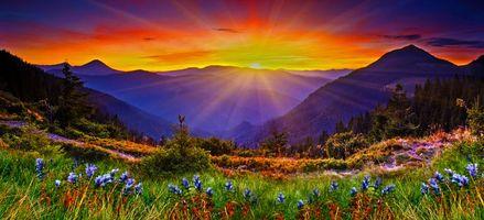 Бесплатные фото закат,горы,деревья,цветы,панорама,пейзаж