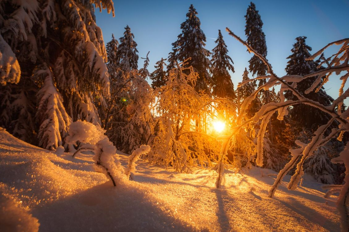Фото бесплатно зима, закат, снег, лес, деревья, сугробы, пейзаж, пейзажи