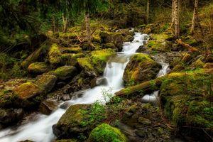 Бесплатные фото лес, речка, водопад, камни, природа