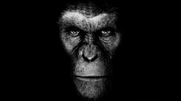 Photo free planet of the apes, face, movies