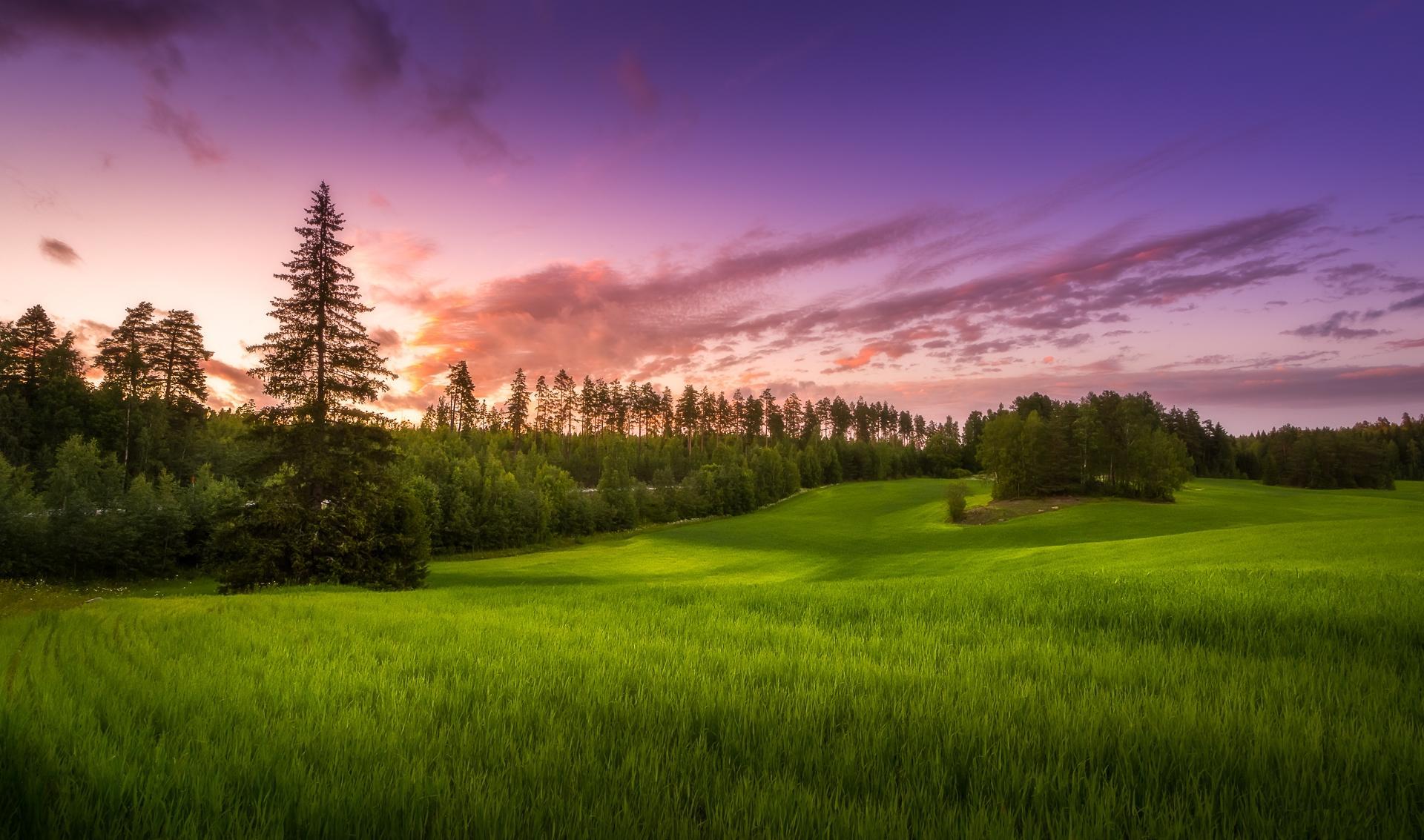 Обои закат, поле, деревья, пейзаж