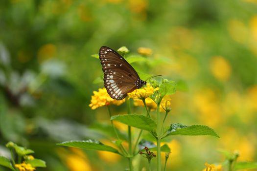 Фото бесплатно бабочка, жёлтый цветок, опыление