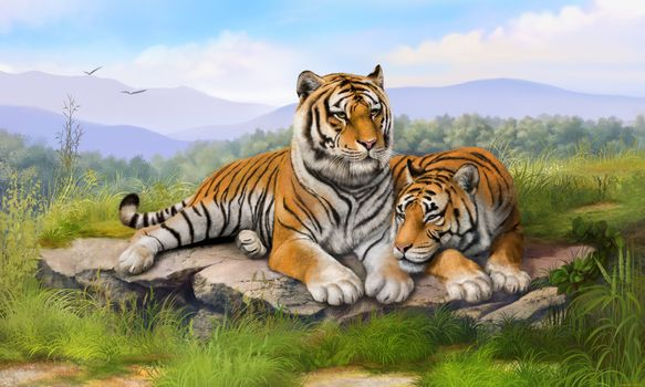 Photo free tigers, predators, the tiger and the tiger