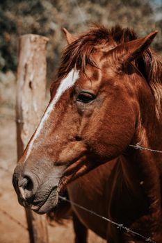 Фото бесплатно лошадь, забор, кавалерия