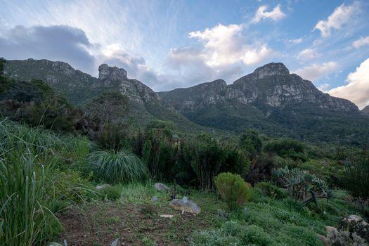 Фото бесплатно кустарники парка, США, горы сша
