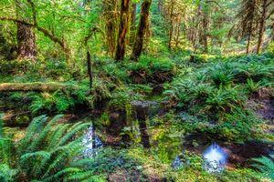 Бесплатные фото Olympic National Park,лес,деревья,водоём,природа