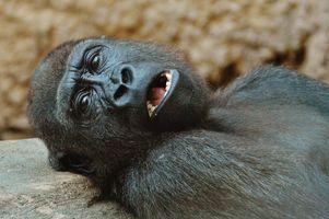 Фото бесплатно животное, дикая природа, зоопарк