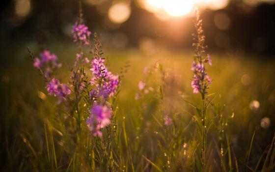 Photo free flowers, lilacs, boke