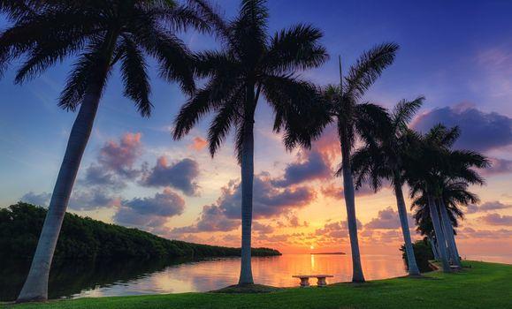 Пальмы в Майами · бесплатное фото