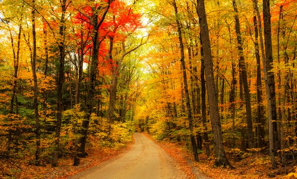 Download autumn, the road free wallpaper