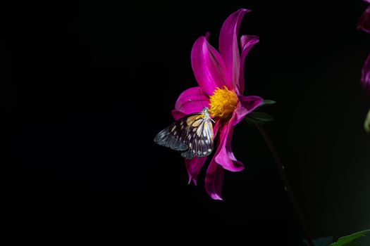 Photo free butterfly, macro, black background