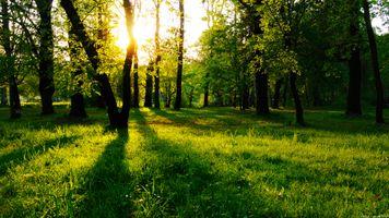 Фото бесплатно умеренный широколистный и смешанный лес, осень, газон