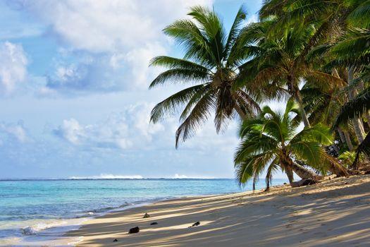 Заставки пальмовые деревья, пляж, горизонт