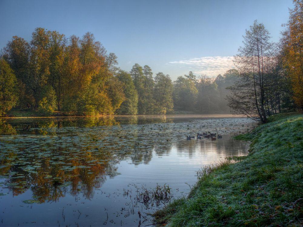 Фото бесплатно Кузьминки Парк, пейзаж, пруд - на рабочий стол