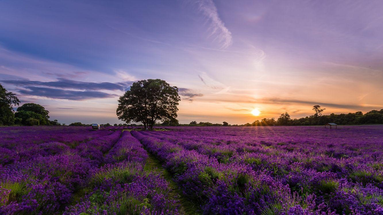 Обои закат солнца, поле, цветы картинки на телефон