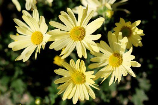 Заставки цветок, желтый, матрица