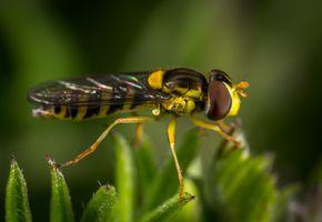 Бесплатные фото насекомое, макрос, макросъемка, вредитель, летать, крупным планом, беспозвоночный
