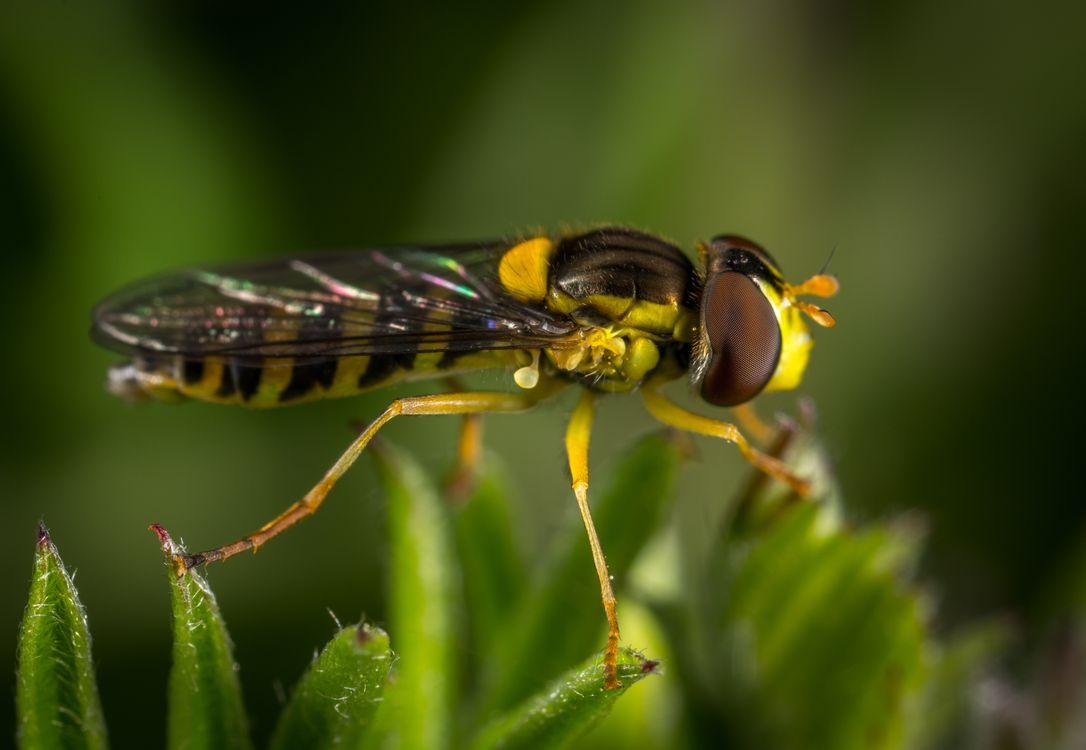 Фото насекомое макрос макросъемка - бесплатные картинки на Fonwall