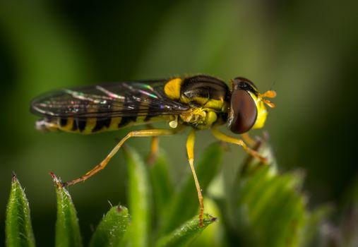 Заставки насекомое, макрос, макросъемка