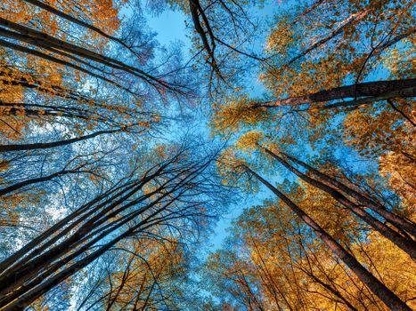 Фото бесплатно кроны, осенние краски, природа