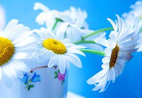Photo free chamomile, flowers, flora
