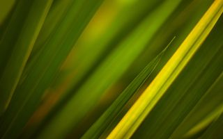 Фото бесплатно лепесток, желтый, трава