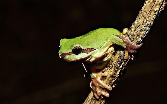 Photo free treefrog, twigs, macro photography