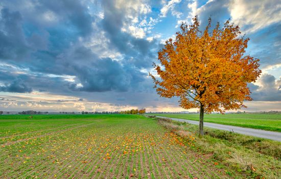 Photo free landscape, single tree, road