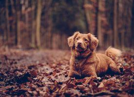 Фото бесплатно собака, сидя, листва, dog, sitting, foliage