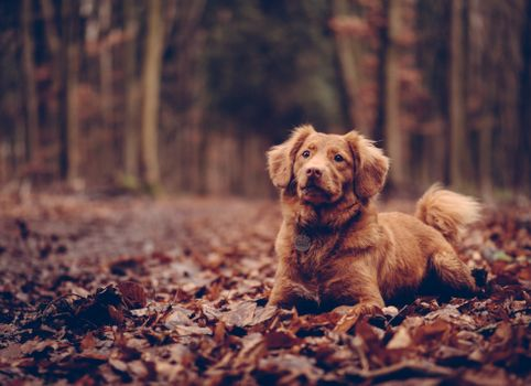 Photo free dog, sitting, foliage
